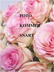Zimmermann - BELLITUDE Flora Bluse